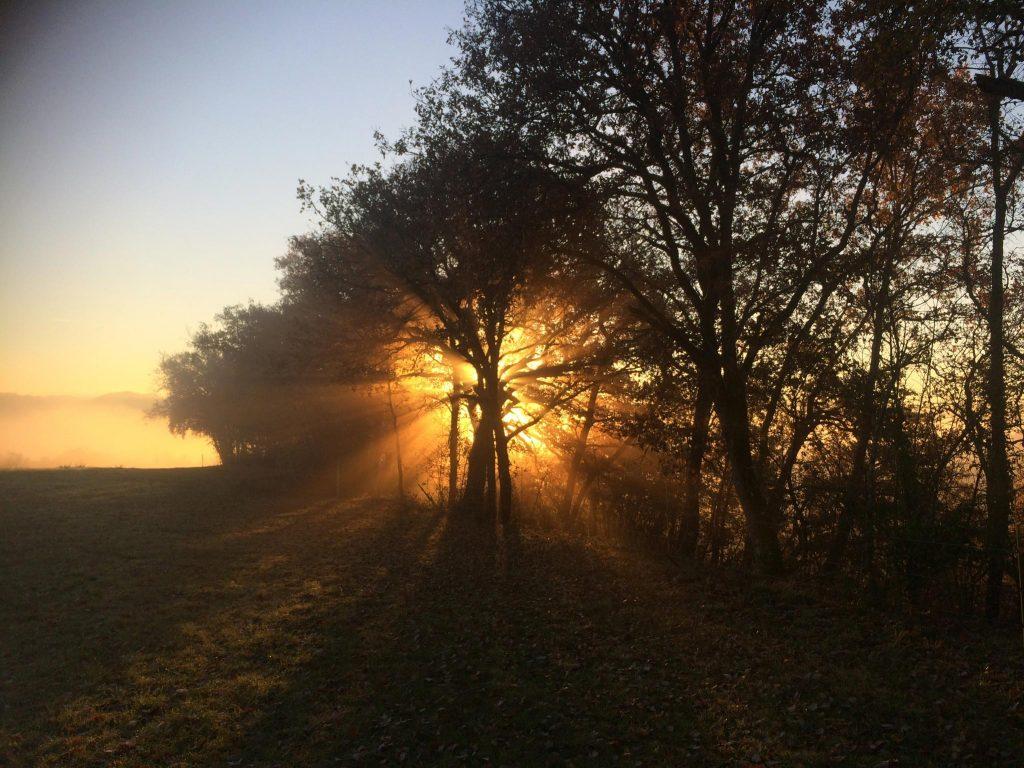 Kraftbaum mit Landschaft